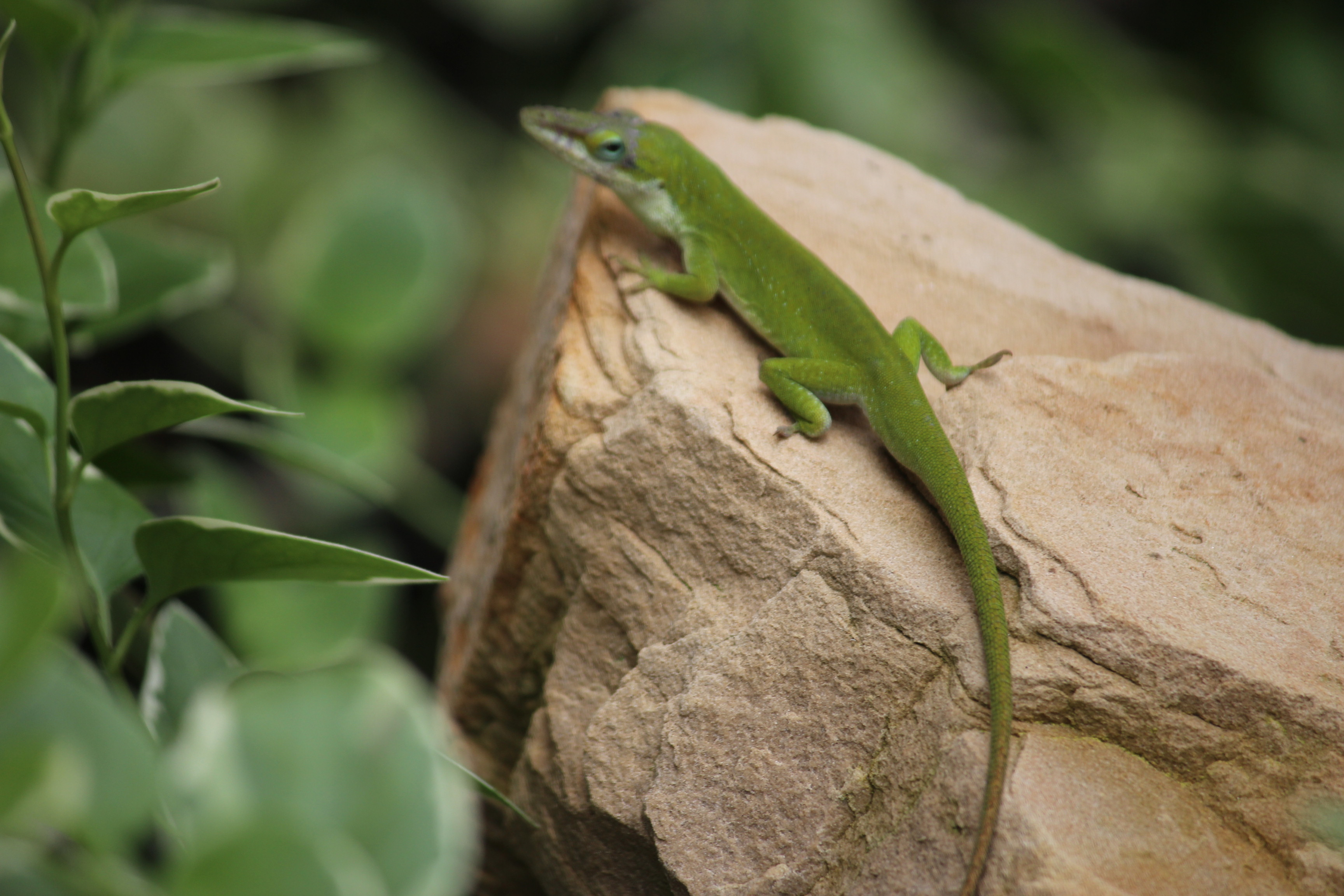Garden Guests of the Lizard Variety…. | Michele Busch